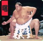 Yokozuna's picture
